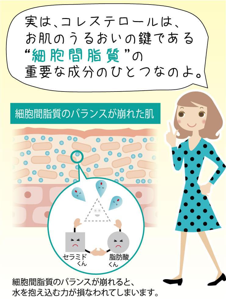 """実は、コレステロールは、お肌のうるおいの鍵である""""細胞間脂質""""の重要な成分のひとつなのよ。 細胞間脂質のバランスが崩れると、水を抱え込む力が損なわれてしまいます。"""