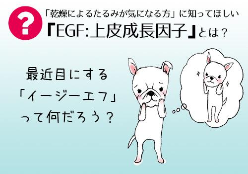 EGF 上皮成長因子とは